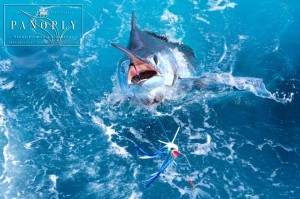 Panoply Sport Fishing and Charters